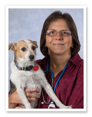 About Harrison Animal Hospital in Harrison